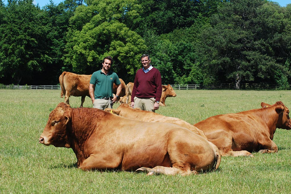 Daylesford Herd Wins Most Improved Herd Award for the South Devon breed