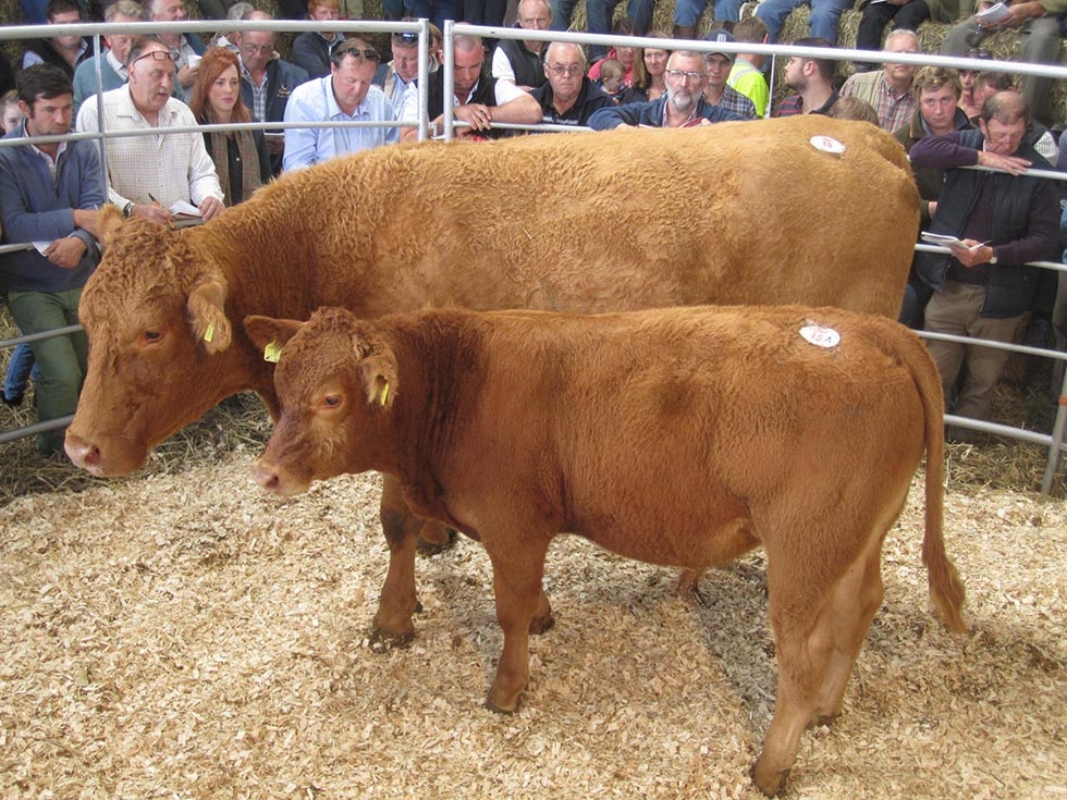 Goffe Cave Katherine 3 sold for 3,000gns