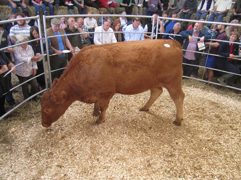Hay Lane Amber sold for 2,000gns