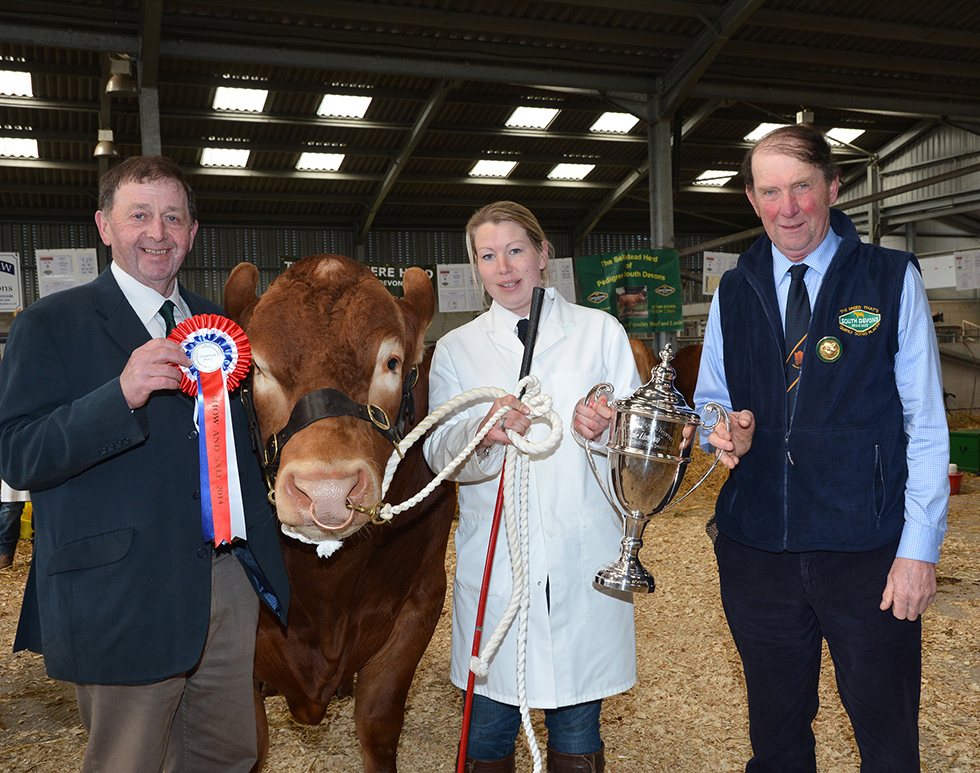 South Devon Midland Club Breeders Club Sale 2014