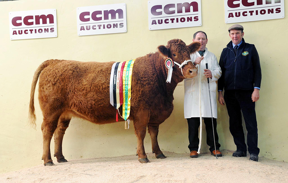 CCM South Devon Harrison Female Supreme Champion Brafferton Juniper 10 and Judge