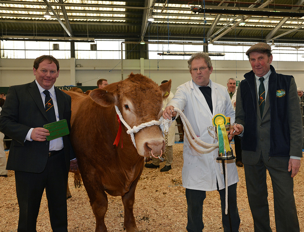 Male Champion - Z Colcharton Jasper 2