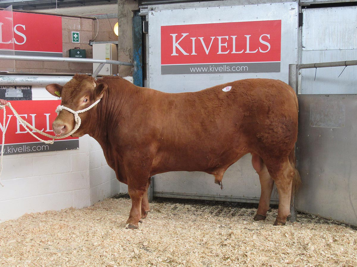 Lot 27 - Kestle Dominator 2 - 5600 gns