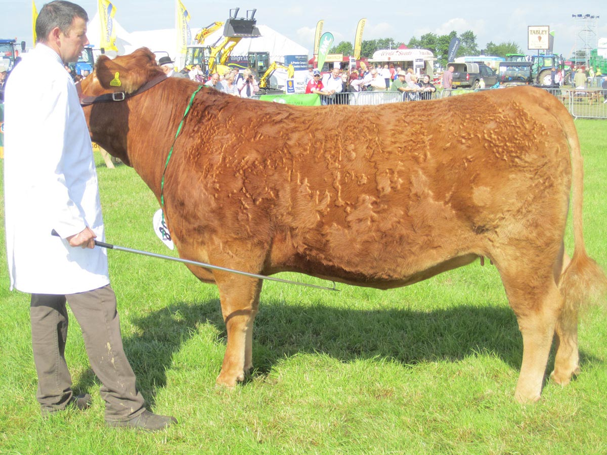 Best Polled Animal – Z Polkinghorne Tulip Blitz 58