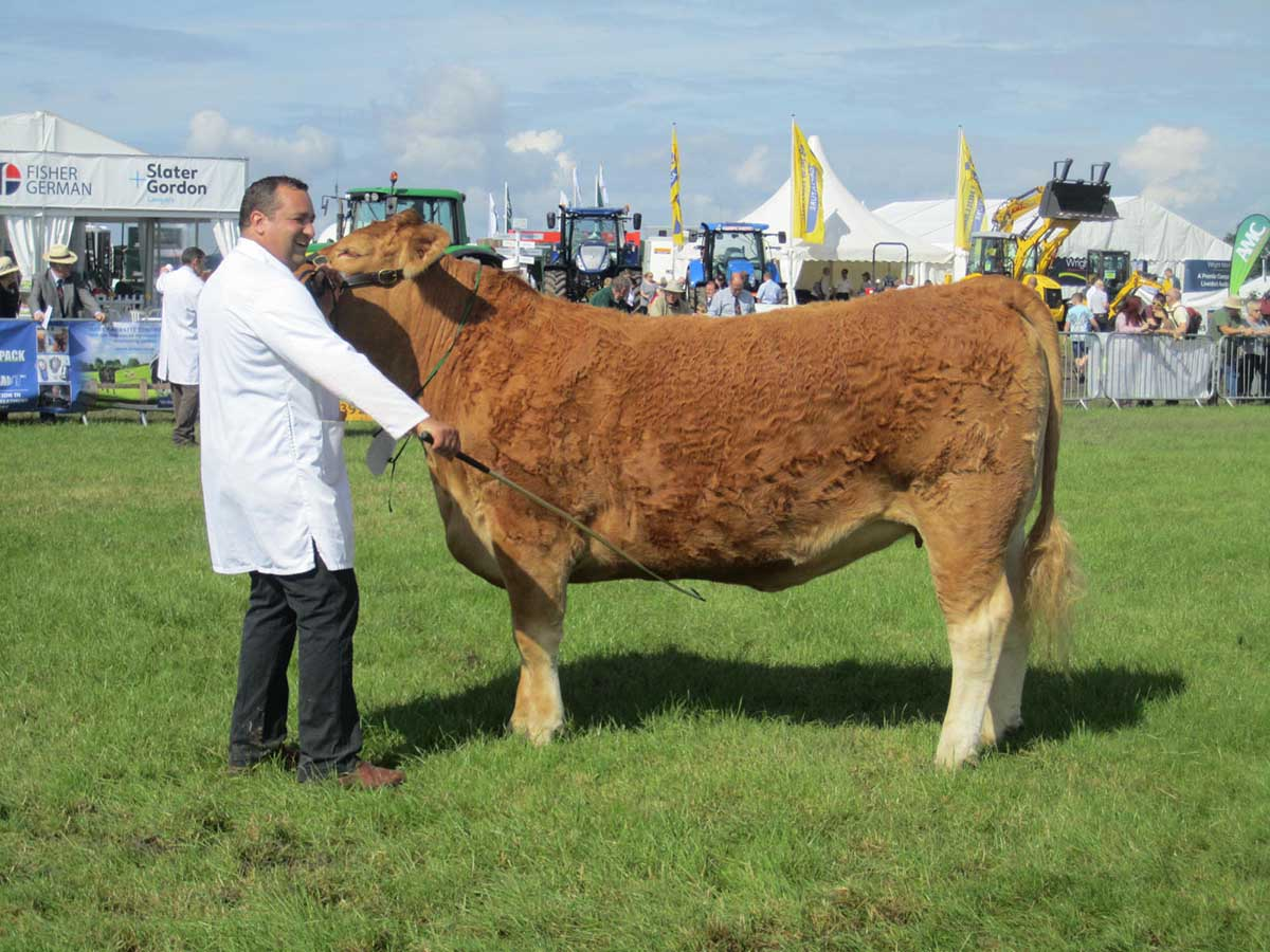 Reserve Breed Champion – AI Kestle Dahlia 73