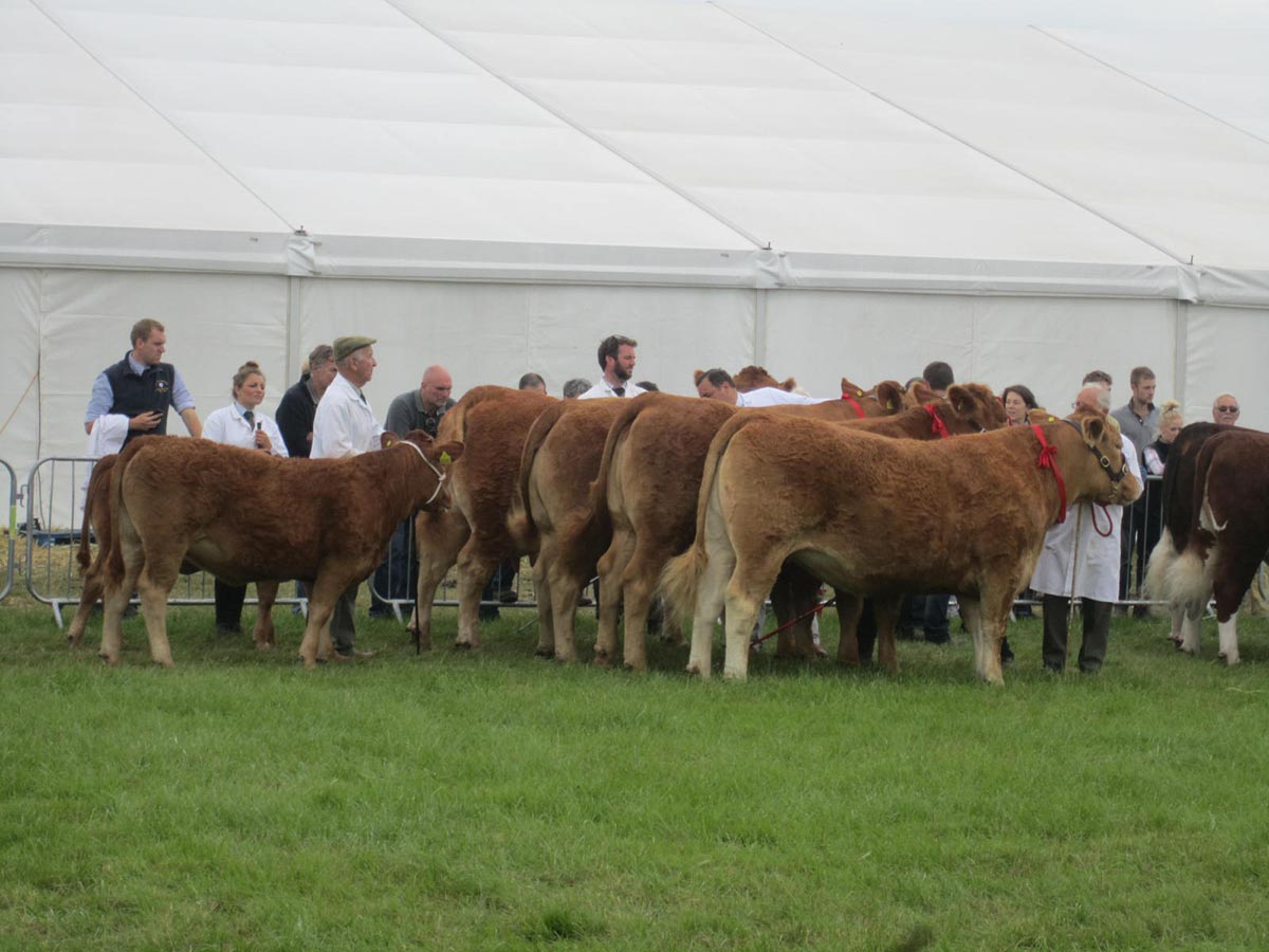 Team of Four, interbreed class