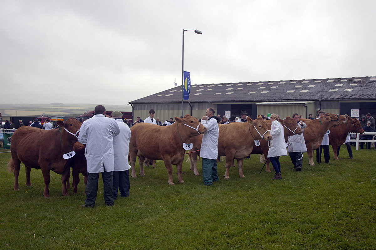 Young Cow Class
