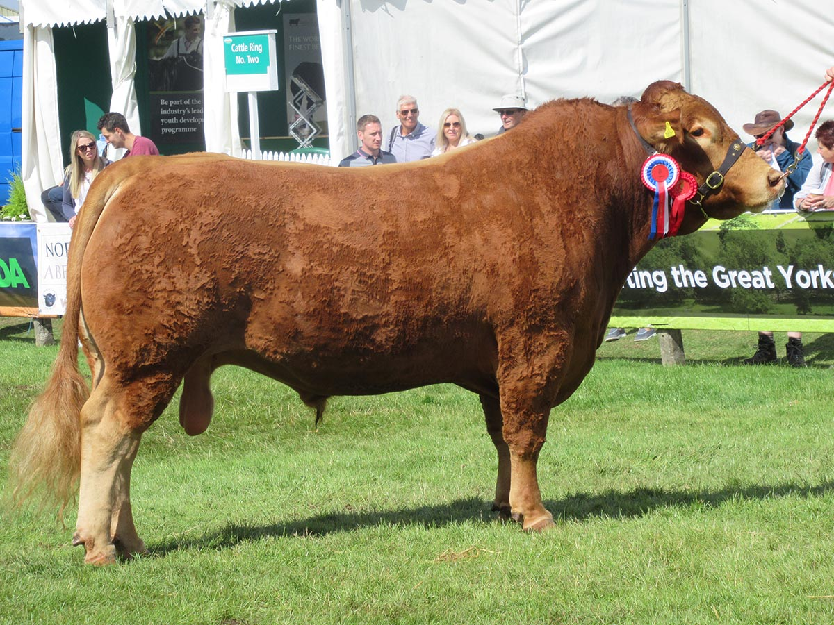 The Great Yorkshire Show 2017