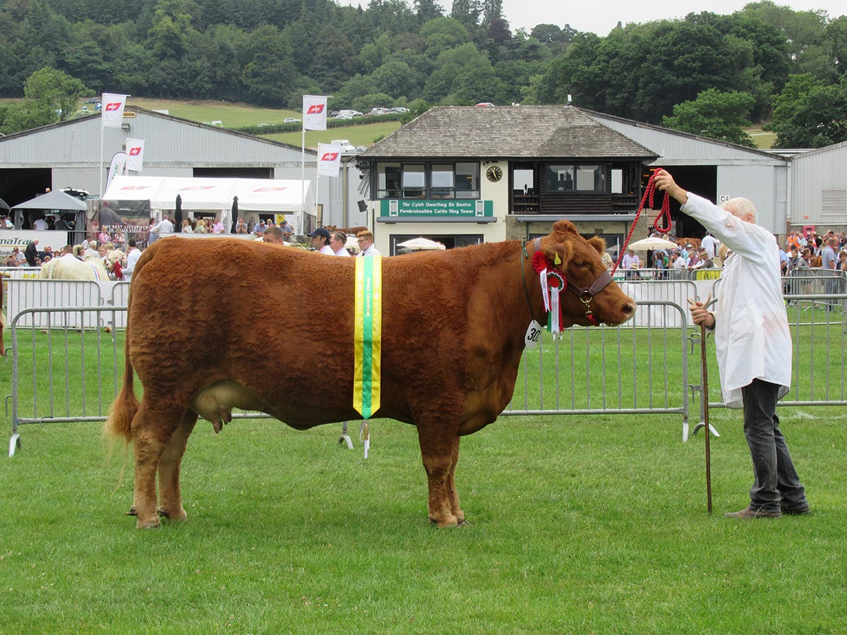 Royal Welsh Show 2018 - Female Champion